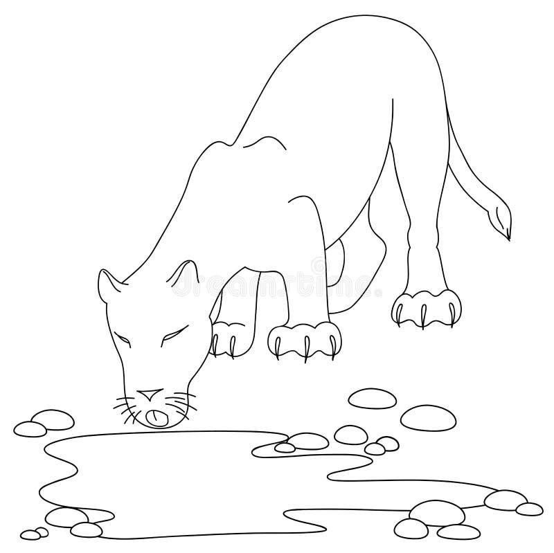 Download Drinking lioness stock vector. Image of feline, leopard - 21399987