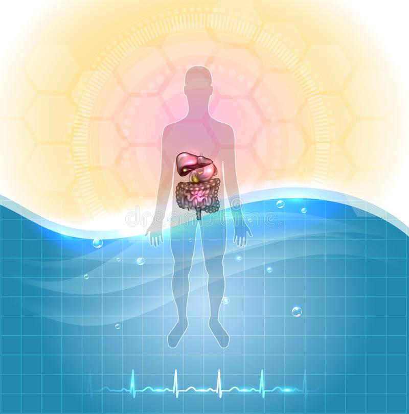 Drinking water health concept. Health care poster- drinking water is healthy. Human silhouette and gastrointestinal tract detailed anatomy, standing in the water vector illustration