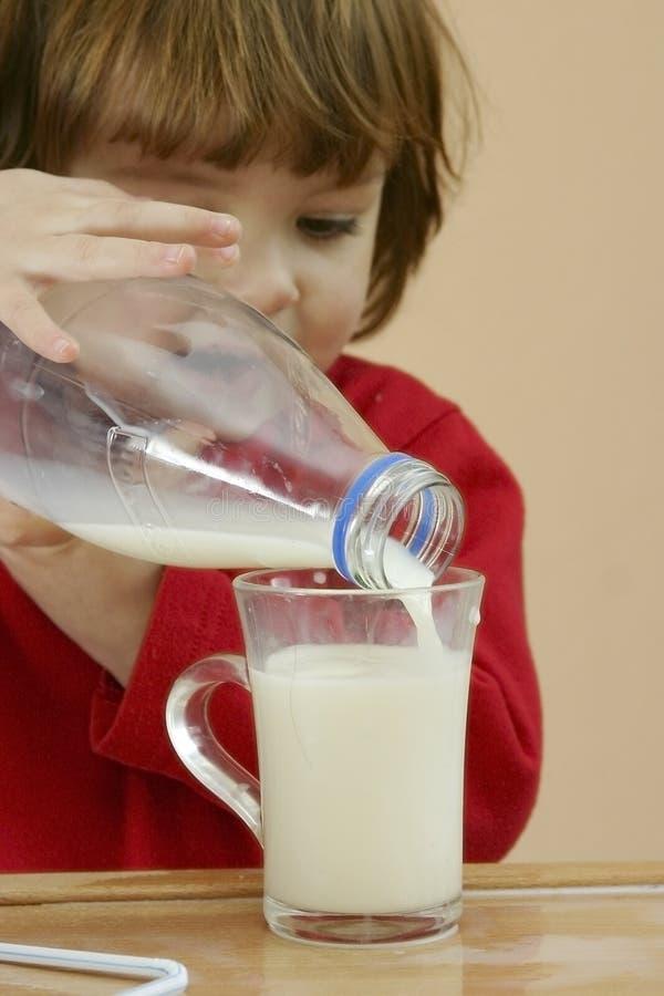 drinkungar mjölkar bör fotografering för bildbyråer
