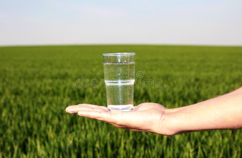 Drinkwaterweide stock foto's