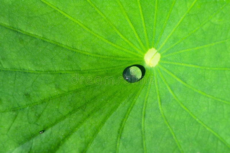 Download Drip Stock Images - Image: 10784514