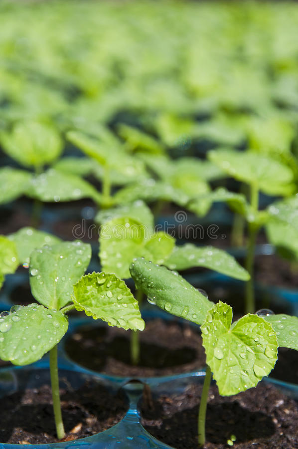 Download Drip stock photo. Image of seeds, herb, spring, plants - 24709310