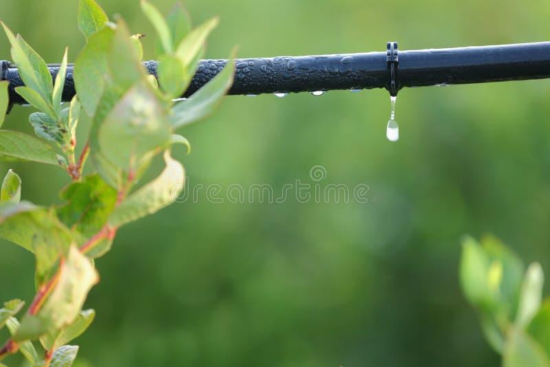 Drip Irrigation System Close Up stock photos