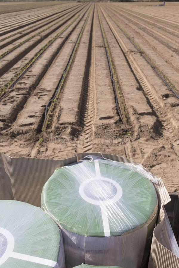 Drip irrigation tape reels close to recently planted seedlings. Overhead shot stock photo