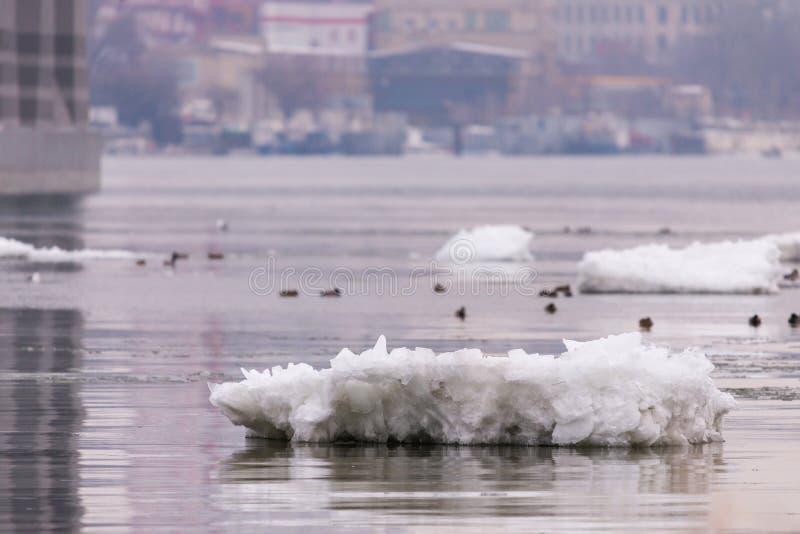 Driva isbergisflak sv?va p? vattnet Avbrott av isen p? floden p? v?ren arkivfoton