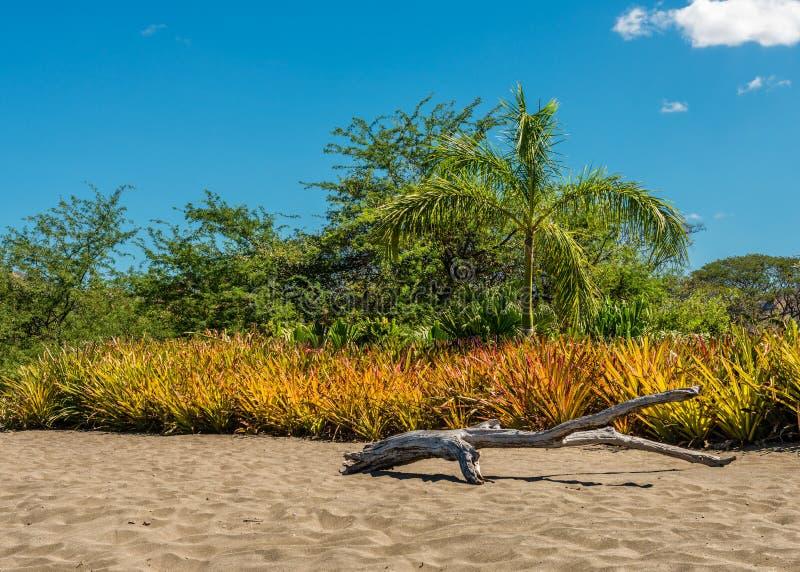 Driva trä på stranden med bakgrund av träd och vegetation royaltyfri foto