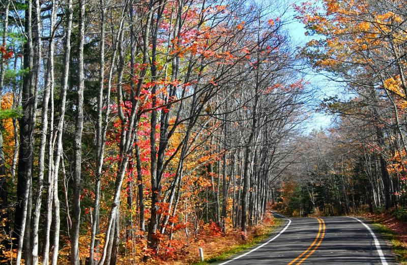 Drive Through Autumn Tree royalty free stock image
