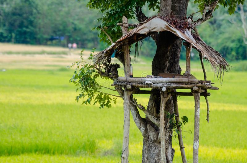 Machaan Tree house : Watch tower for the fields. During the drive between the villages where they rely on agriculture as their income, I saw the tree house or stock image
