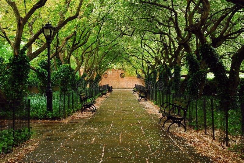 Drivhusträdgård i Central Park arkivbilder