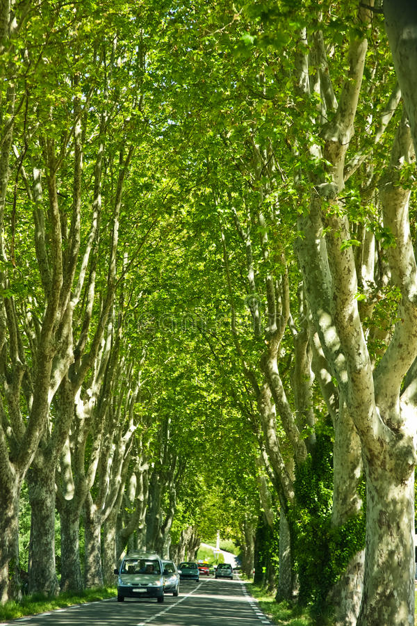 Download Driving in Provence stock photo. Image of trees, travel - 27251094