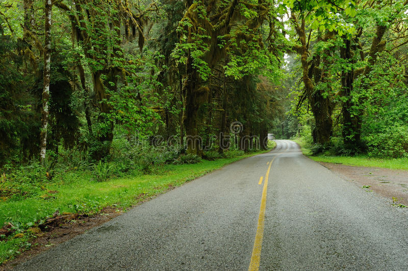 Driving in rain forest royalty free stock photos