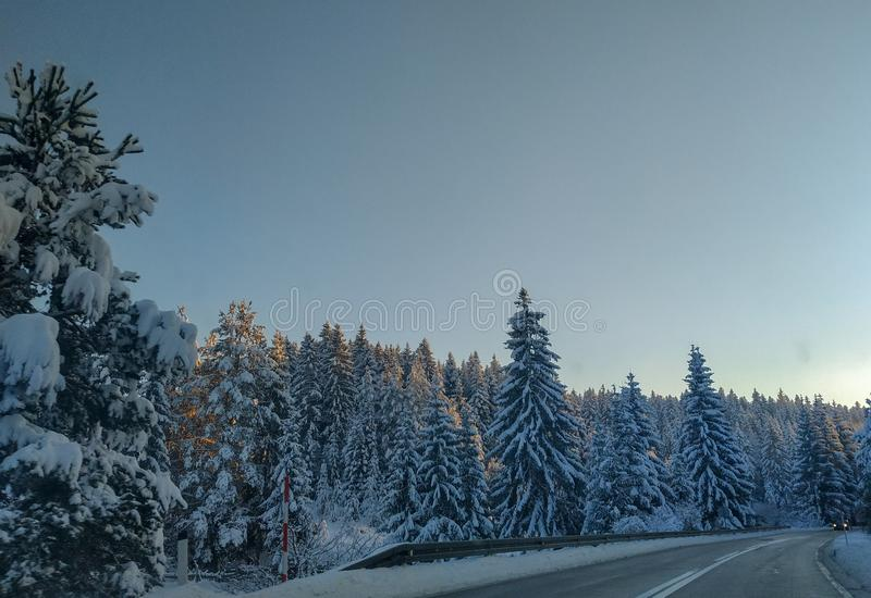 Driving on a road during winter holiday season in the forest nature evergreen trees covered in snow and blue sky above royalty free stock photo