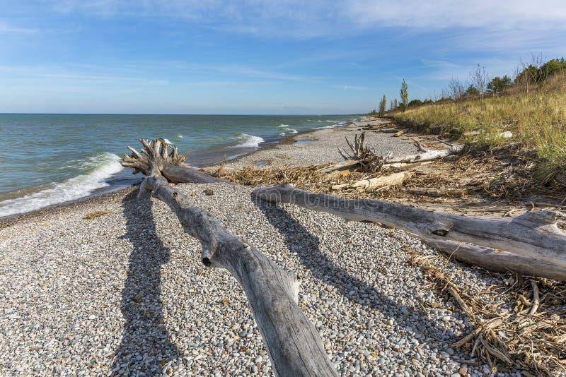 Drivved och kiselstenar på en Lake Huron strand arkivbild