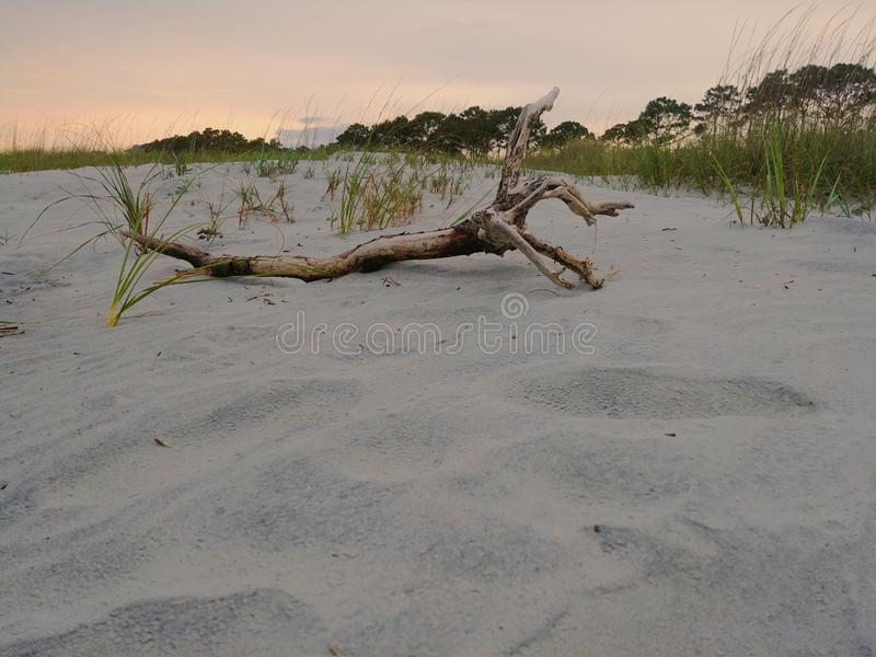 Drivved på en strand nära strandgräs på solnedgången arkivfoton
