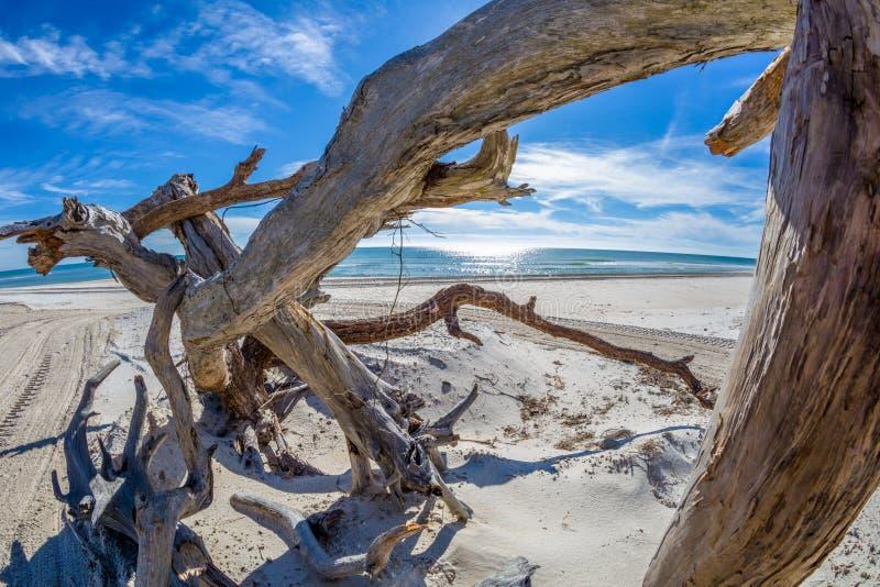 Drivved på stranden på St George Island Florida royaltyfria bilder