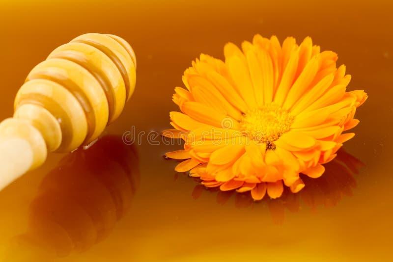 Drizzler de madeira no mel e em flores doces frescos do fundo imagens de stock