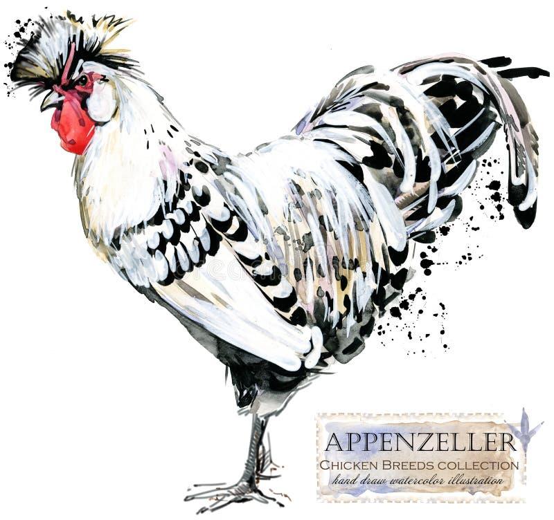 Drobiowy uprawiać ziemię Kurczak hoduje serie domowy rolny ptak ilustracja wektor