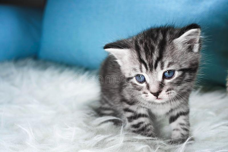 Droevig katje Het katje is vermoeid en ziek royalty-vrije stock foto