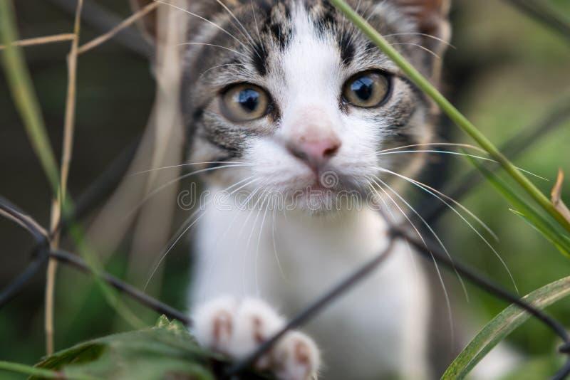 Droevig katje voorbij de omheining stock foto's