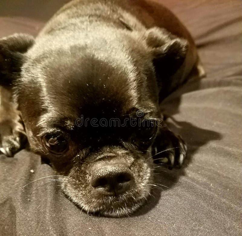 Droevig Puppy stock foto's