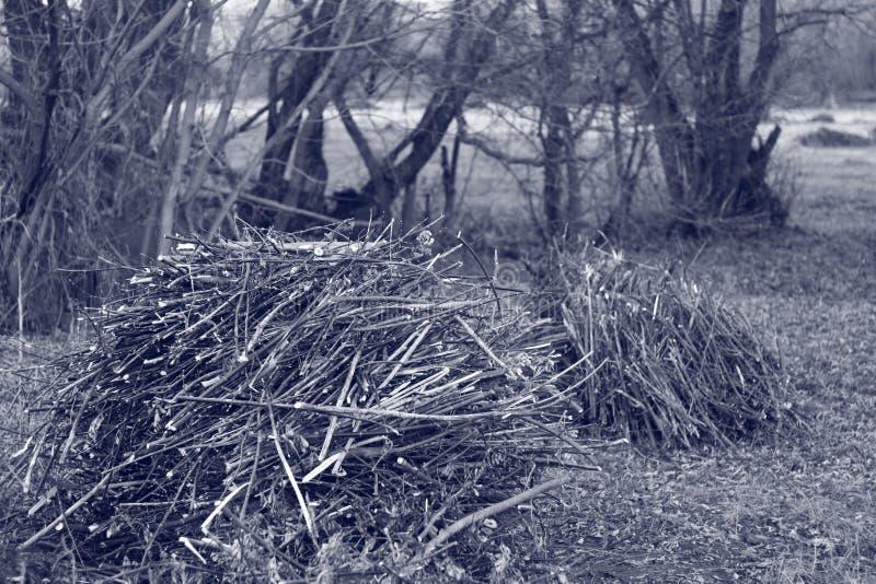 Droevige aard, zwart-wit kreupelhout, bos royalty-vrije stock foto's
