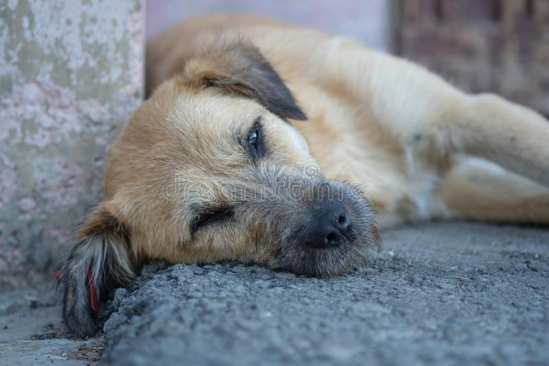 Droevige dakloze hond die op de bestrating liggen royalty-vrije stock foto's