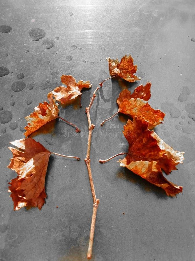 Droevige duidelijke de herfstfoto royalty-vrije stock afbeelding