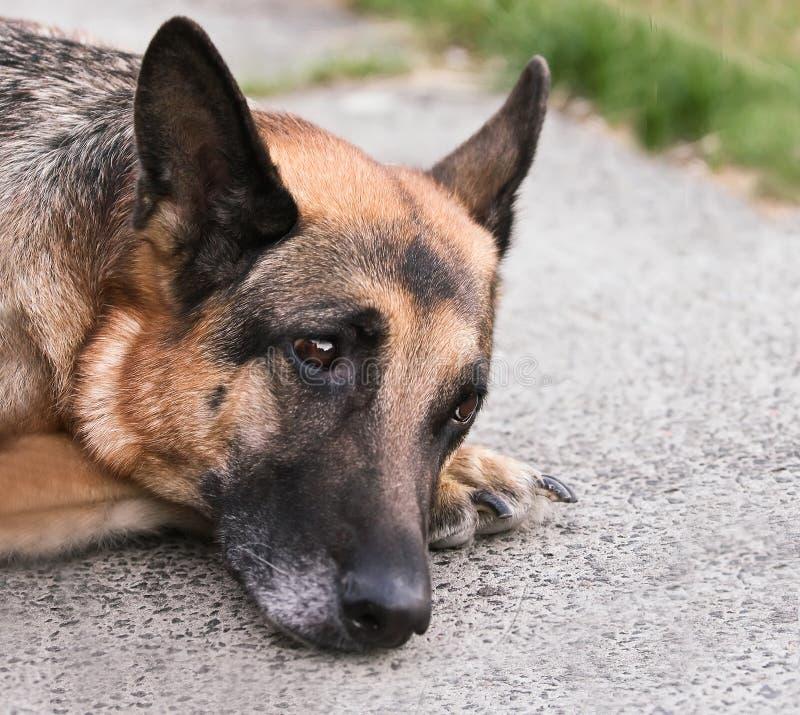 Droevige eenzame hond op asfaltplaten royalty-vrije stock afbeeldingen