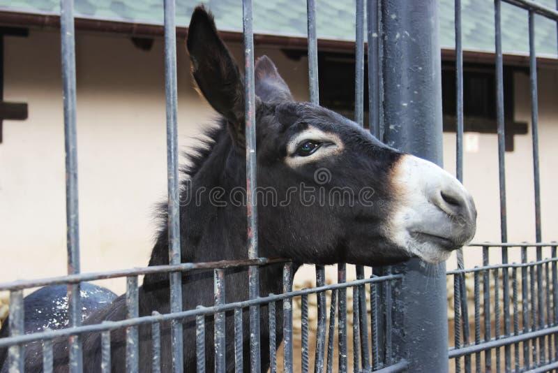 Droevige ezel in de kooi royalty-vrije stock afbeeldingen