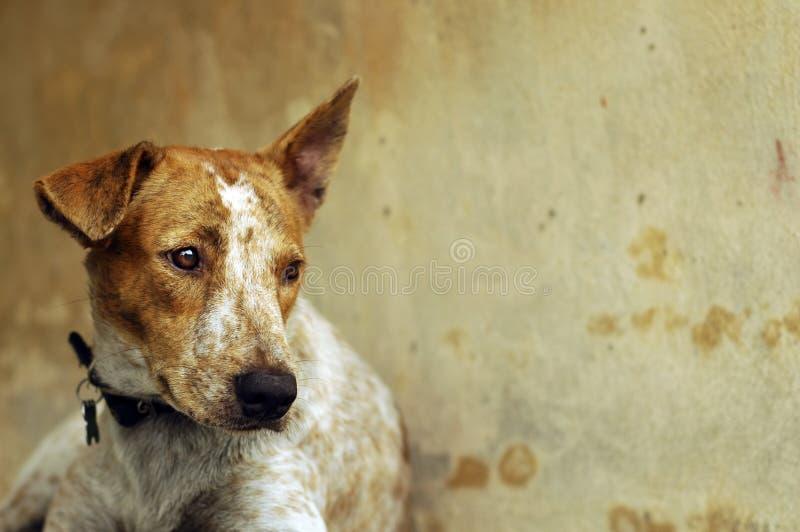 Droevige Hond stock afbeelding