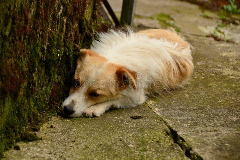 Droevige hond die op de grond liggen stock foto