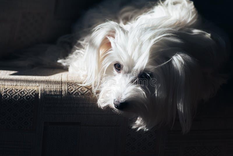 Droevige hond die op goedkeuring in schuilplaats wachten royalty-vrije stock foto's