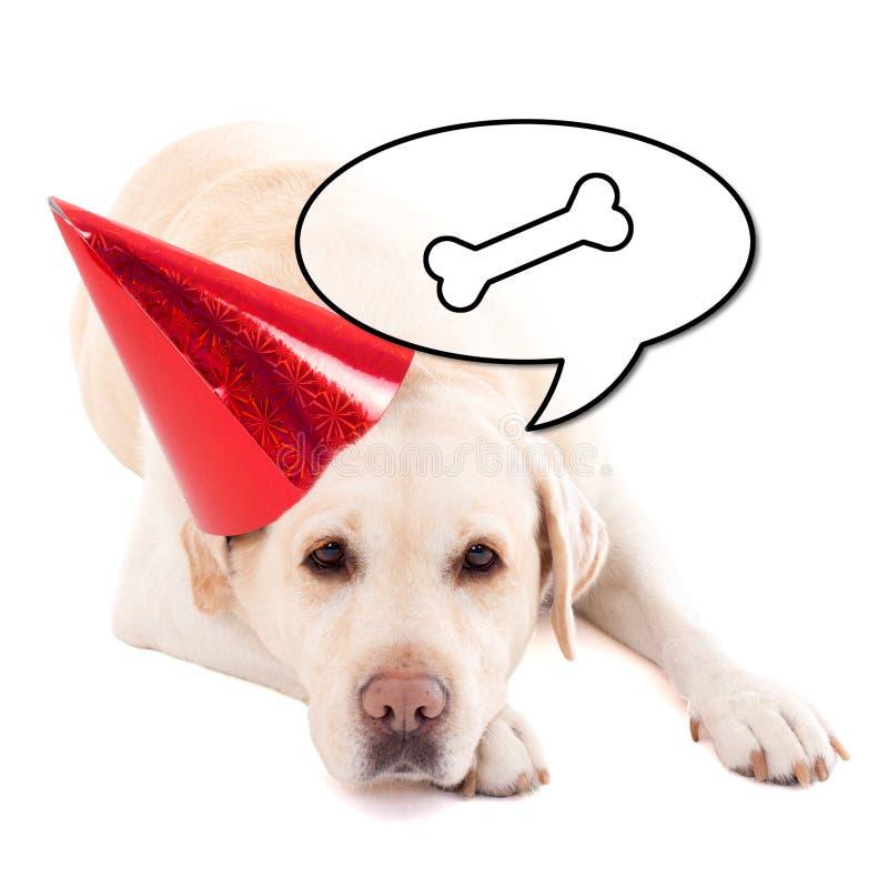 Droevige hond (golden retriever) in verjaardagshoed die over voedsel i denken stock foto
