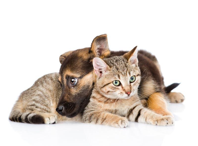Droevige hond met kat die samen liggen Geïsoleerdj op witte achtergrond royalty-vrije stock afbeelding