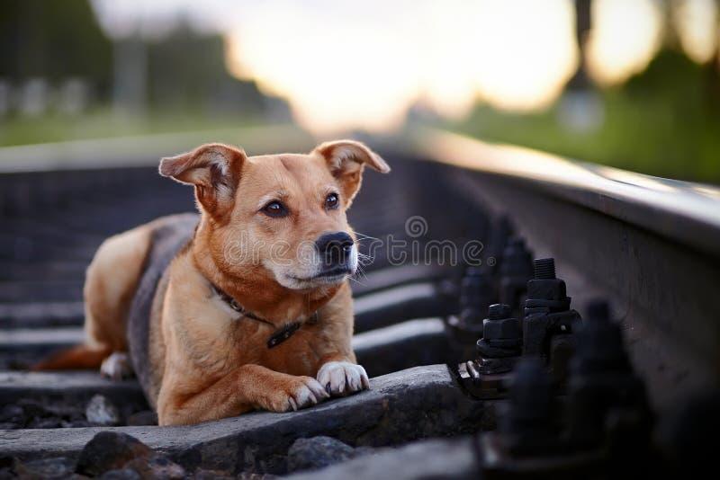 Droevige hond op sporen. stock foto's