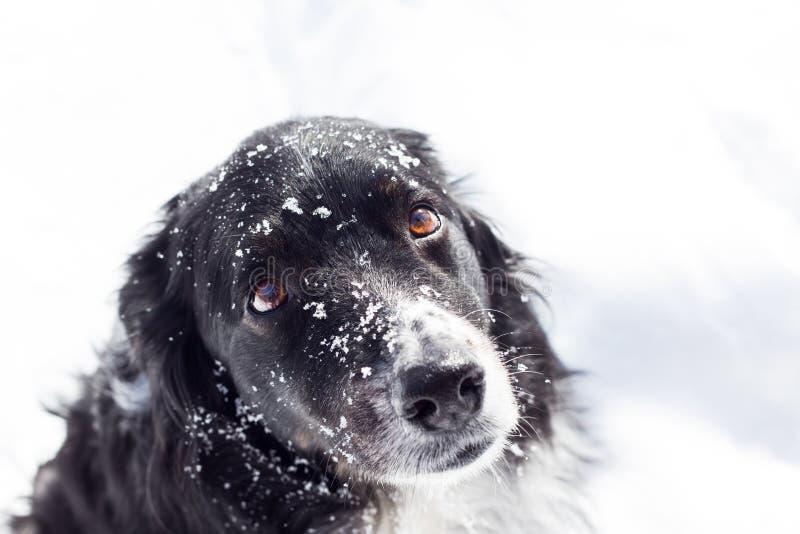 Droevige hond in sneeuw stock fotografie