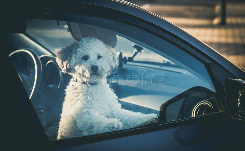 Droevige hond verlaten in auto royalty-vrije stock foto