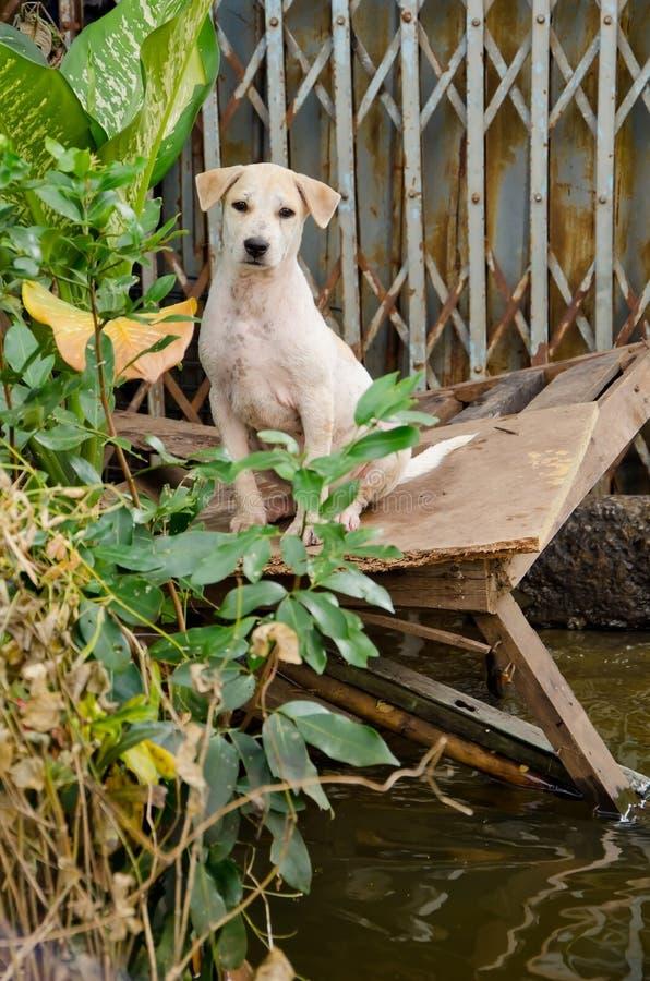 Droevige hondvlucht van de vloed royalty-vrije stock afbeelding