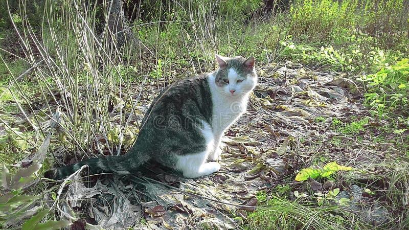 Droevige kat in de vroege herfst royalty-vrije stock afbeeldingen
