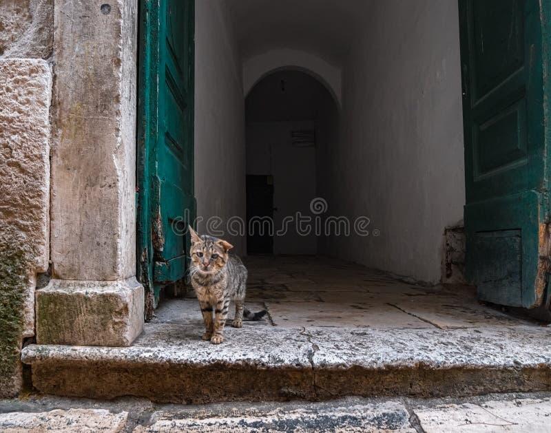 Droevige kat De kat zoekt een lopende wacht royalty-vrije stock foto's