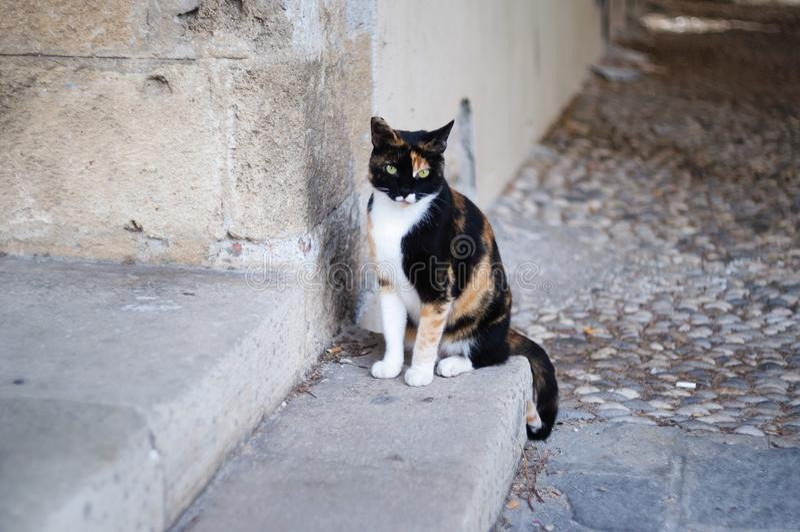 Droevige kat op de treden stock foto