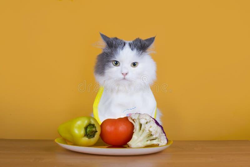 Droevige kat op een dieet vóór de leegte van plaat royalty-vrije stock afbeeldingen