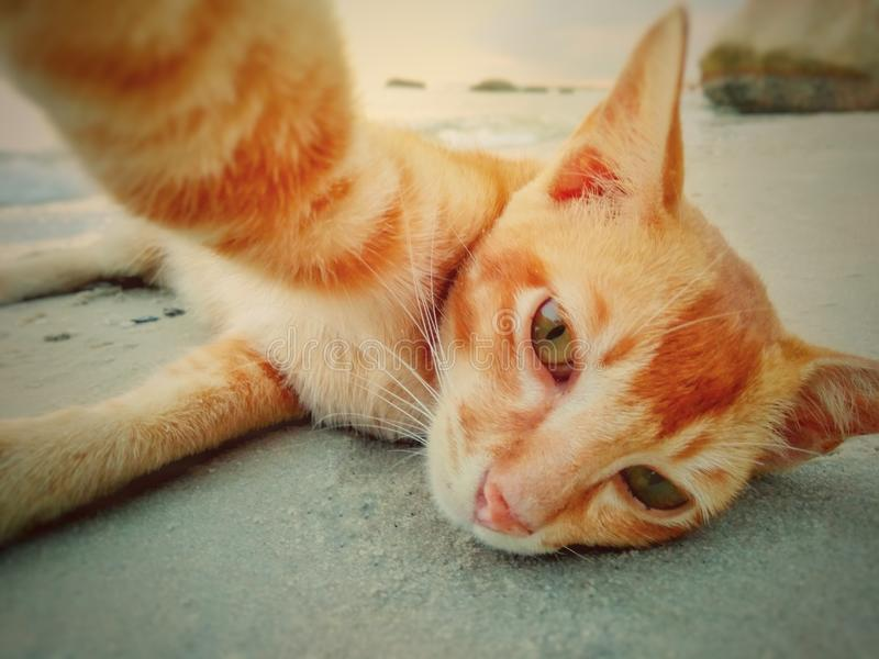 Droevige kat selfie royalty-vrije stock fotografie