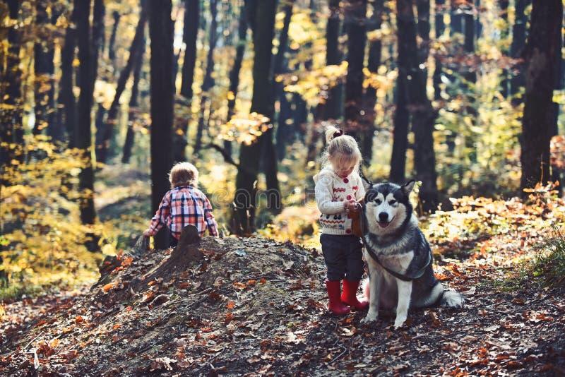 Droevige meisje en jongen met grote hond in bos in de herfst stock afbeeldingen