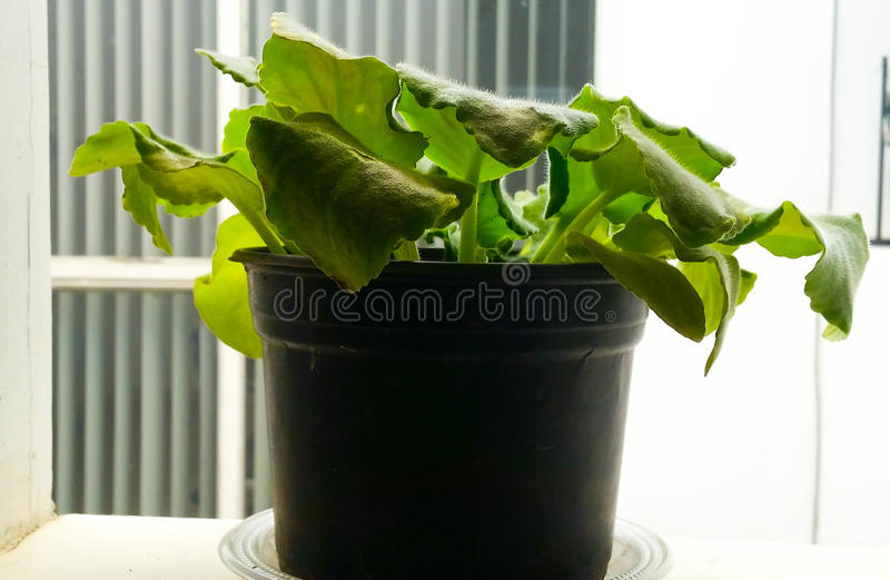 Droevige Plantapequeã±a stock foto's