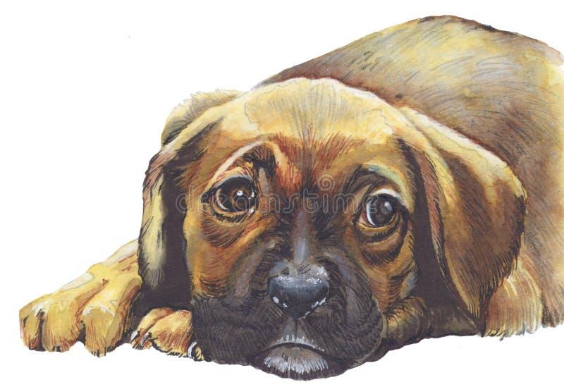 Droevige puppyhond royalty-vrije stock afbeelding