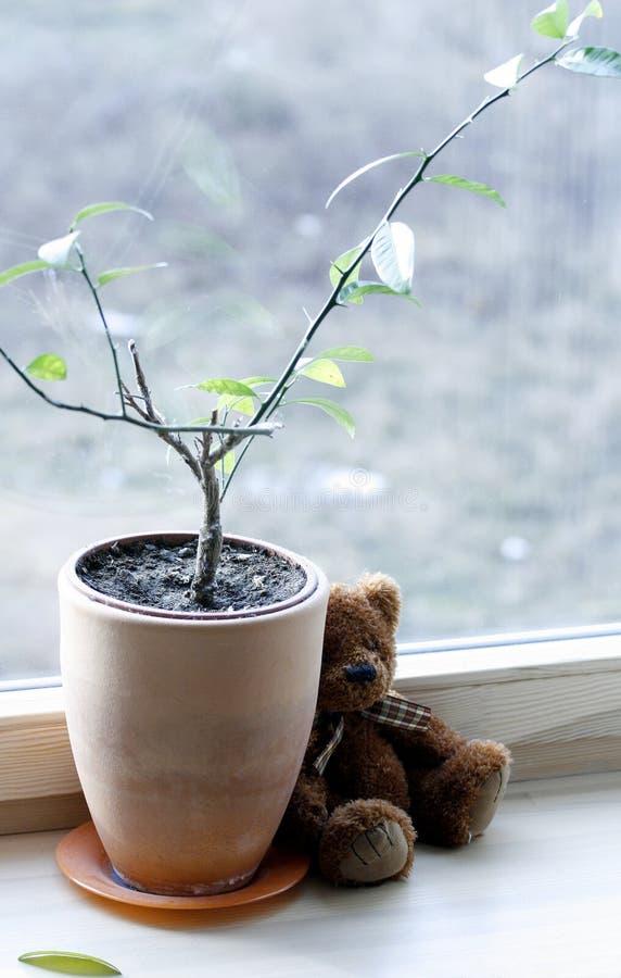 Droevige teddy op het venster stock fotografie