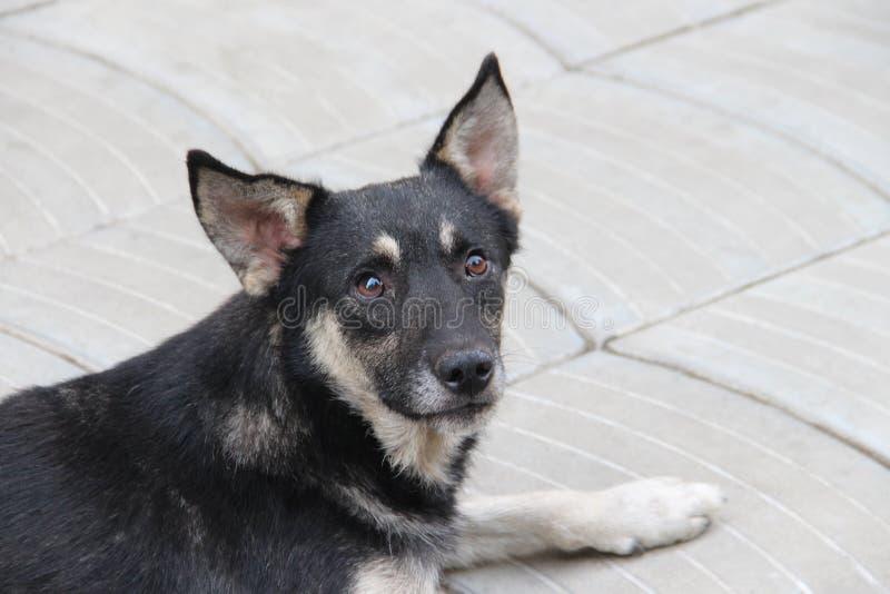 Droevige verdwaalde hond stock foto