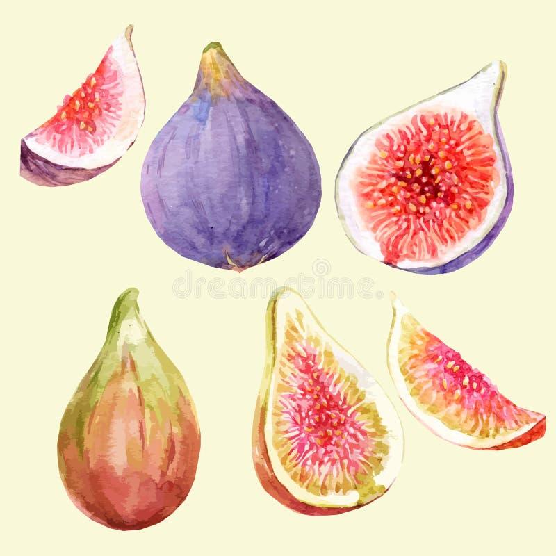 Drog fikonträd för vattenfärg hand stock illustrationer