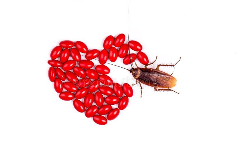 Drog med kackerlackan fotografering för bildbyråer